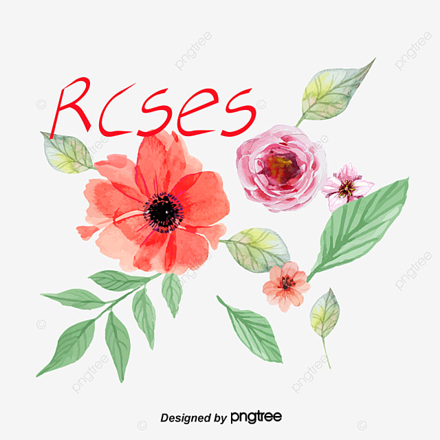 hand drawn rose chinese rose red flower png and vector for free