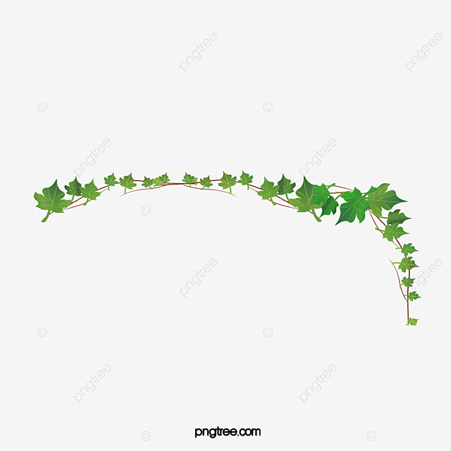 ivy png  vector  psd  and clipart with transparent