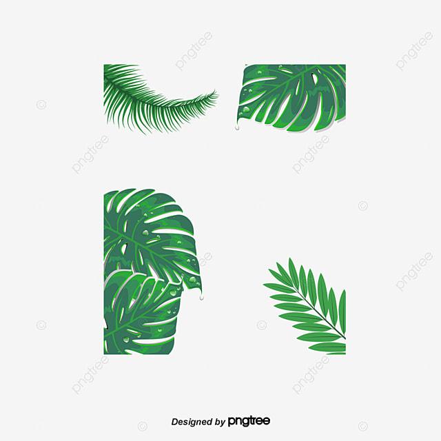 Les plantes vertes de fond feuilles feuille de bananier une les plantes vertes de fond gratuit png et clipart altavistaventures Image collections