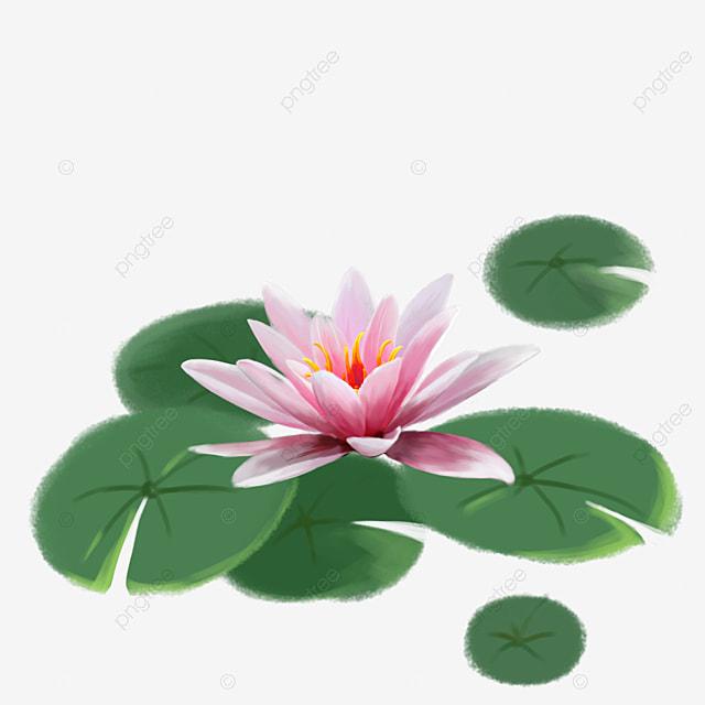 de beaux n u00e9nuphars lotus pierre l  u00e9l u00e9ment de durcissement