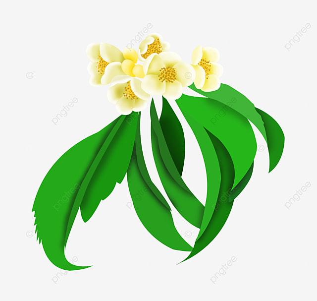 cartoon plumeria picture material plumeria flowers flower png rh pngtree com plumeria clip art images plumeria border clip art