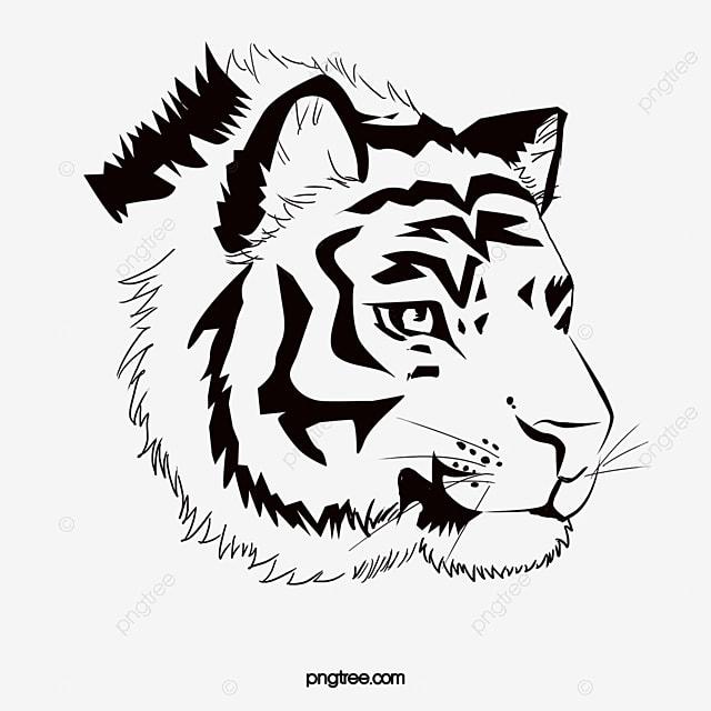 черно белые картинки тигра
