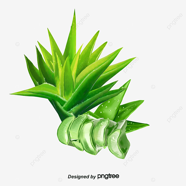 Free Water Droplets Fresh Aloe To Pull Material Drop