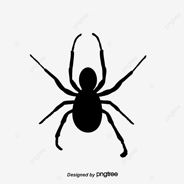 Vector Cartoon Black Spider Spider Black Spider Vector PNG and