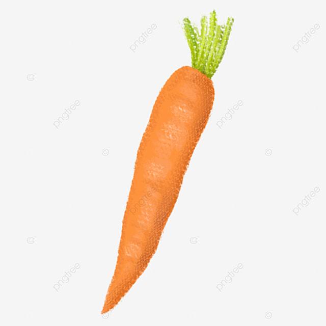 Une carotte carottes de la nourriture des plantes image for Nourriture poisson rouge carotte