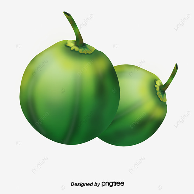 hd fresh green coconut product kind coconut green coconut png rh pngtree com coconut clipart free download coconut clip art black and white