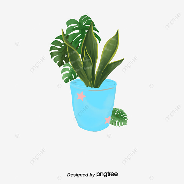 Indoor green plants green plant potted png and psd file for Indoor green plants images
