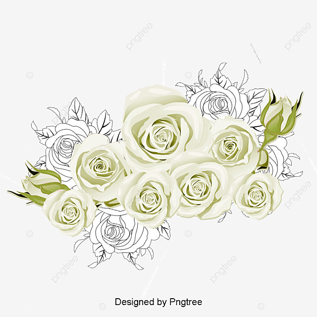 White Roses Vector Rose Sea Vector Material Roses Sea
