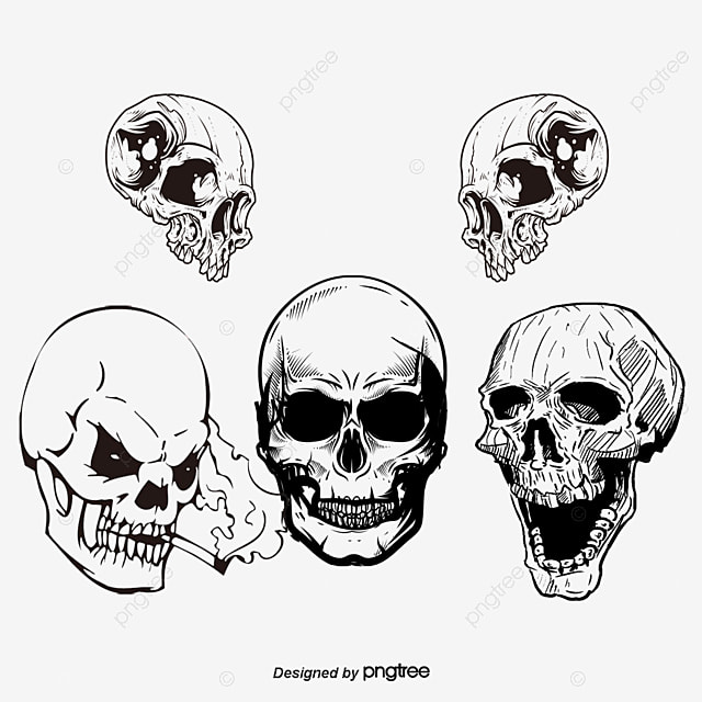 vector skull skull vector skull skull png and vector for free