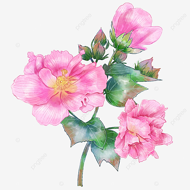 Fuso Belle Fleur Aquarelle Peinture Fleur Les Fleurs Image Png Pour