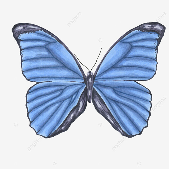 cartoon butterfly material cartoon clipart butterfly clipart rh pngtree com cartoon butterfly clip art free Small Butterfly Clip Art