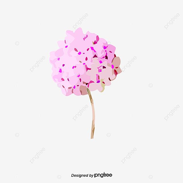 geranium fleurs image hd physique de g u00e9raniums bouquet de