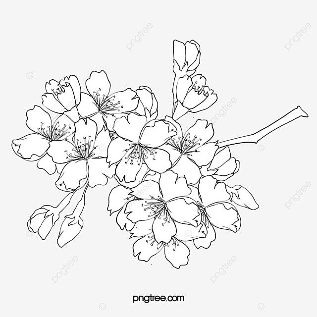 desenhos flores pintura desenho de linhas pintura flores png imagem
