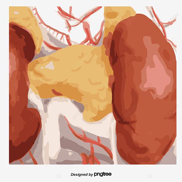 El Sistema Digestivo Humano, Gastrointestinales, Sistema Digestivo ...
