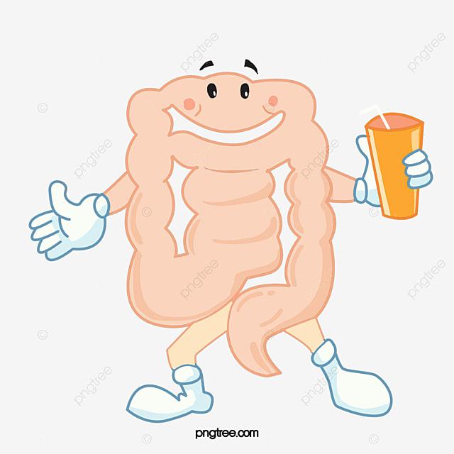 cartoon gut gastrointestinal cartoon the large intestine png and