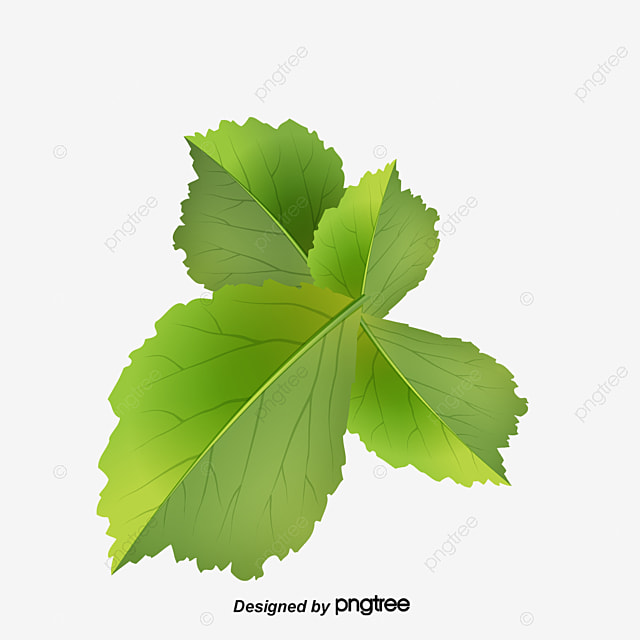 coriander leaves  parsley  green  vegetables png image and green leaf clipart border green leaf clipart border