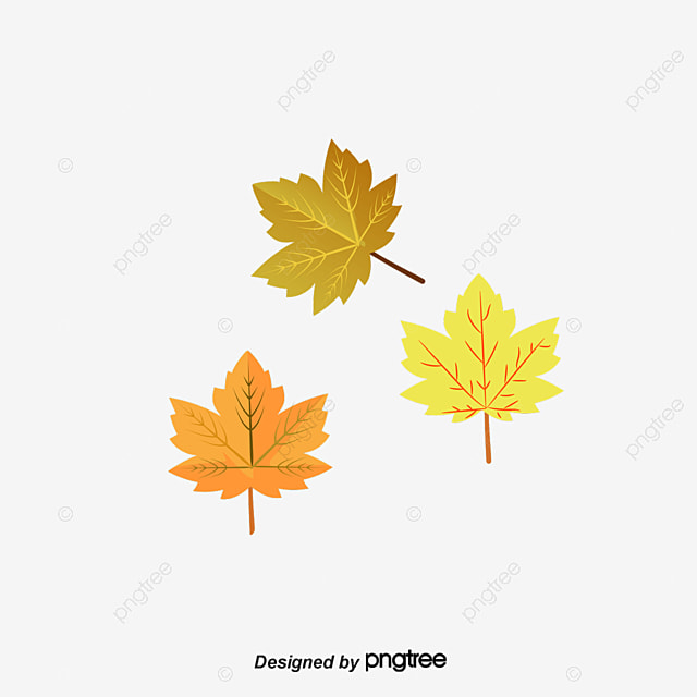 vector autumn leaves 1 vector leaf material autumn leaves png and