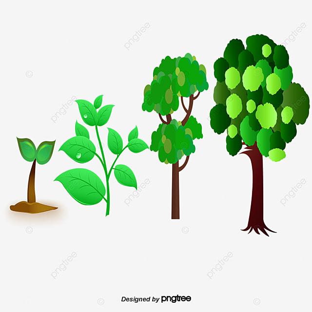 Proceso De Crecimiento De Las Plantas, Proceso De Crecimiento ...