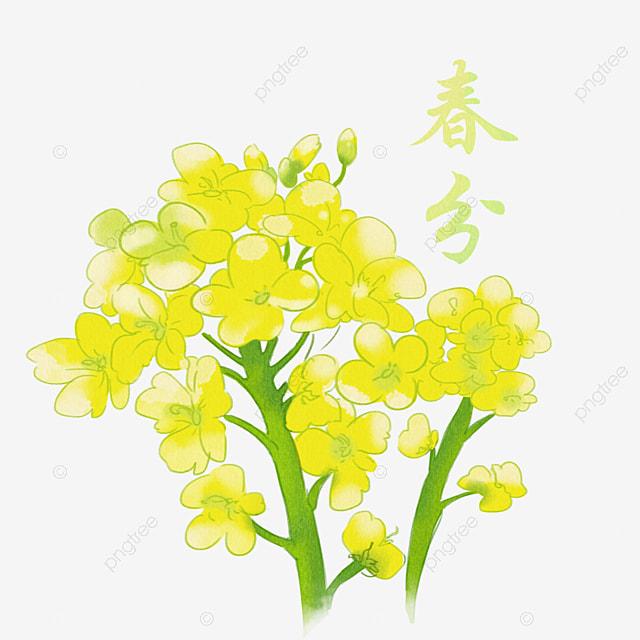 無料ダウンロードのための春の花飾り ラン 黄色 春png画像素材
