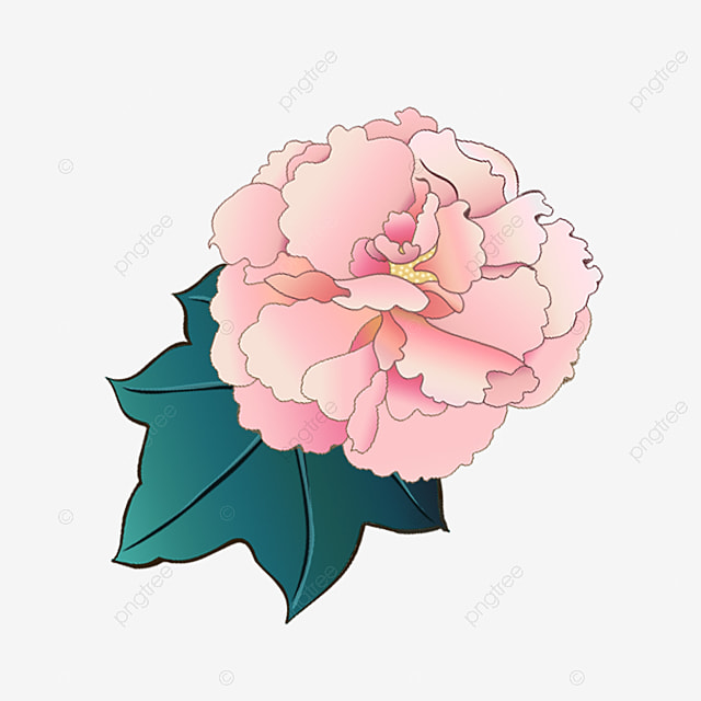 pink hibiscus flowers flowers pink plant png image and