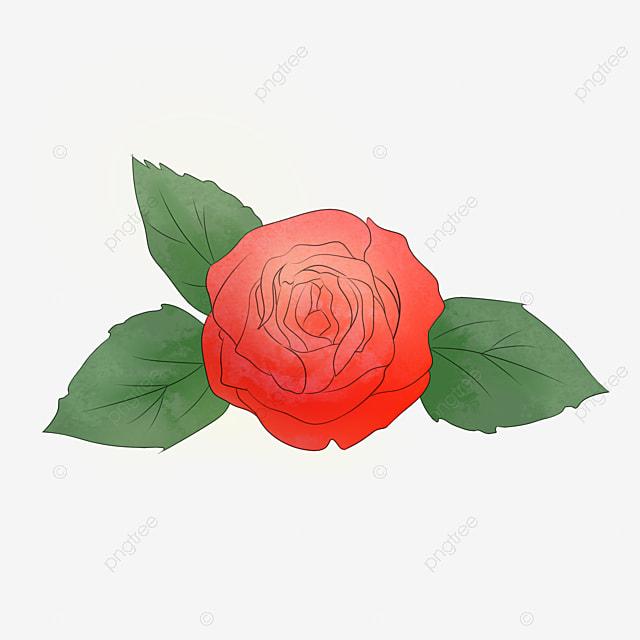 Rosas Rojas Flores Rosas Rojo Imagen Png Para Descarga Gratuita