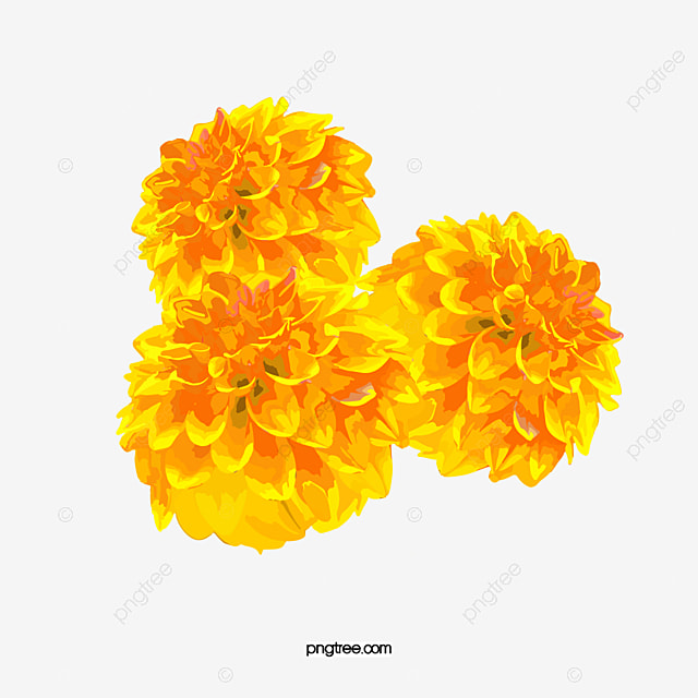 Yellow marigold flowers marigold plant png image and clipart for yellow marigold flowers marigold plant png image and clipart mightylinksfo