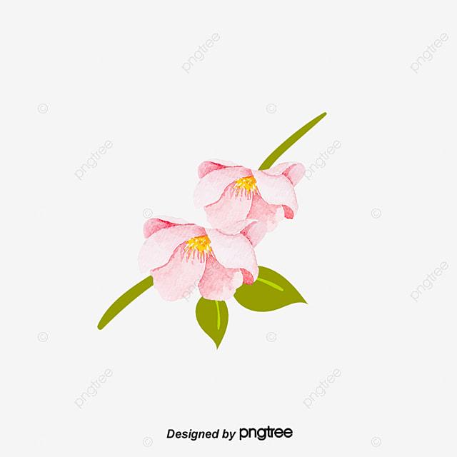f5e53e720a7e9 ناقلات زهرة الوردي سحلية الديكور ناقلات زهرة الأوركيد الأوركيد ...