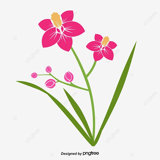 rouge de d u00e9coration de vecteur orchid u00e9e de printemps le
