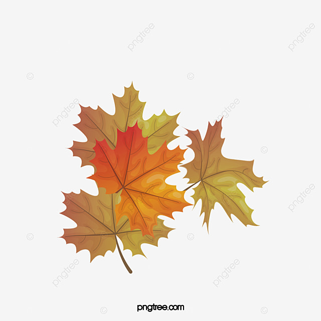 hojas secas leaf planta seco imagen png para descarga gratuita
