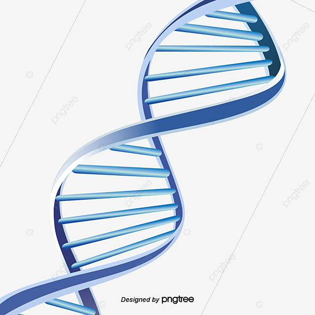 Dna Model Wallpaper: Dna Double Helix Structure, Dna, Double Helix, Structure