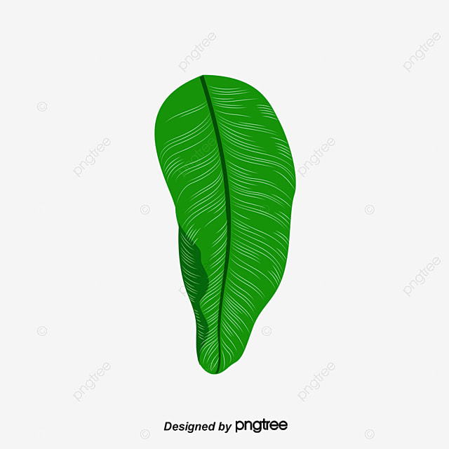 Banana Leaves In Kind Leaf PNG Image And Clipart