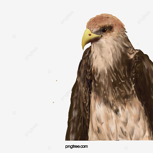 eagle head and sharp eyes  animal  eagle  sharp png