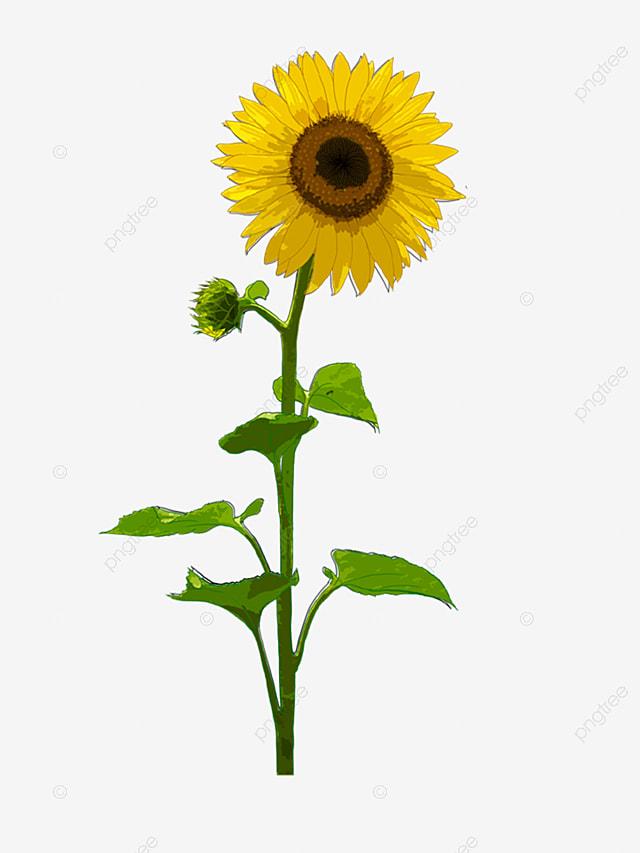 Vector Korean Sunflower Lace Frame 1, Vector Flowers, Line Flower ...