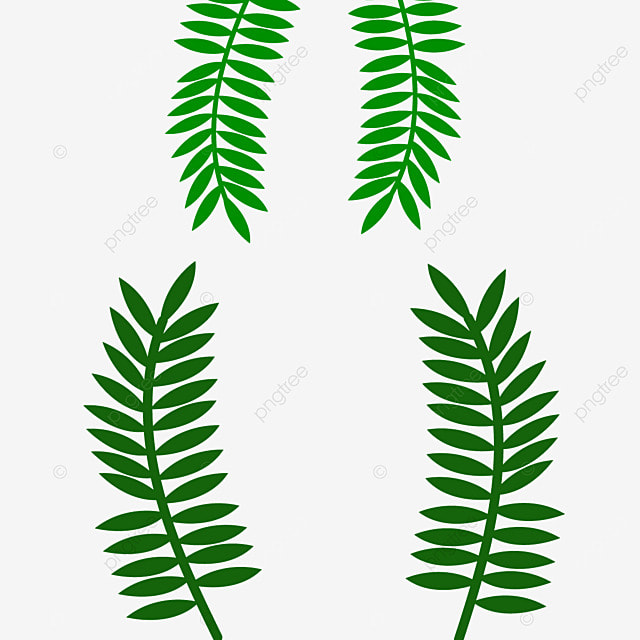 Palm Leaves Coconut PNG Image And Clipart