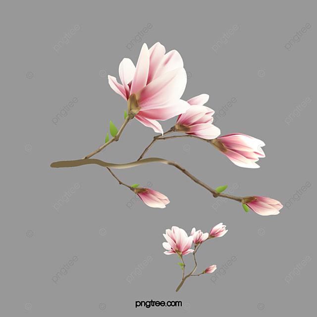 Watercolor pink magnolia flower watercolor magnolia watercolor watercolor pink magnolia flower watercolor magnolia watercolor pink flower pink magnolia png and maxwellsz