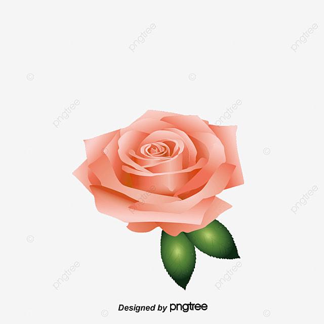 Le Vecteur De La Fleur D Amour Vecteur L Amour Les Fleurs Png Et
