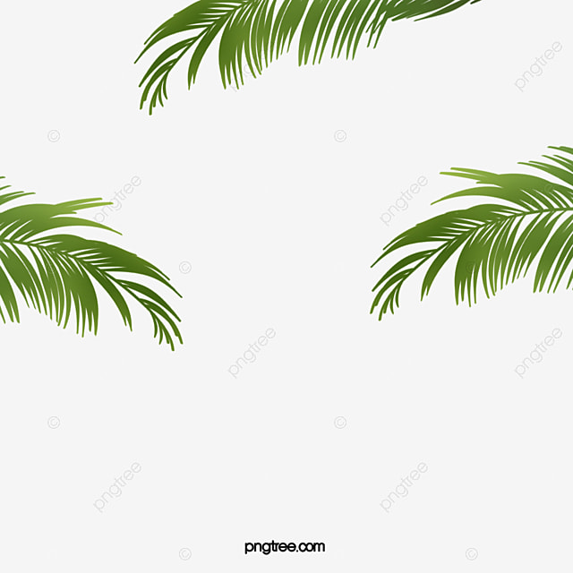Coconut Tree Leaves Png | Theleaf.co