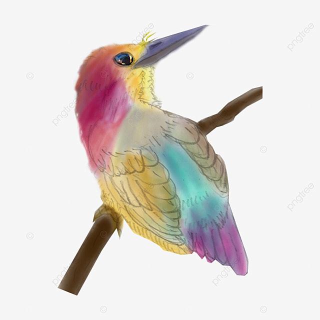 colibri de couleur colibri couleur dessin image png pour