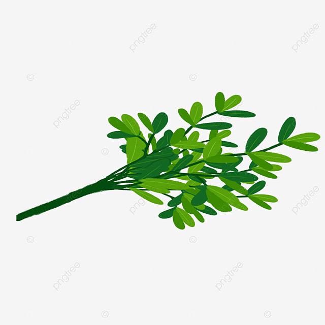 vecteur et les branches d arbres  u00e0 feuilles vecteur vert les arbres png et vecteur pour