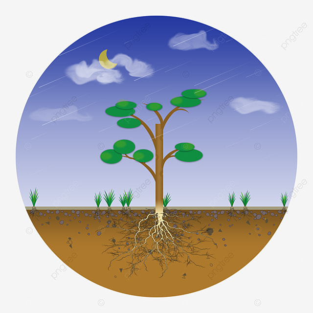 Grass soil cross section soil soil profile land png for Where do we find soil