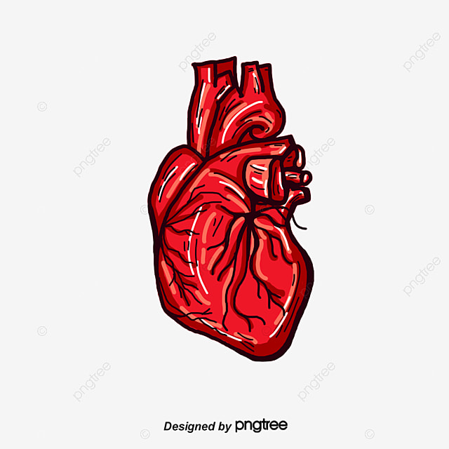vector human heart  3d  decoration  blood vessels png and italian food clipart black and white italian food clipart images