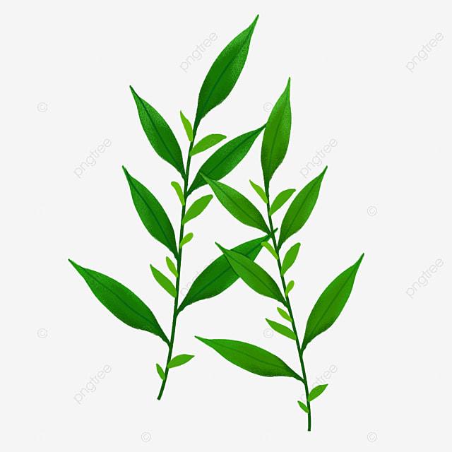 cannabis leaves illustrations marijuana illustrations plant png rh pngtree com marijuana clip art free marijuana clip art free