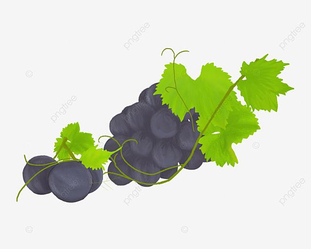 um cacho de uvas uva uva roxa folhas verdes png imagem