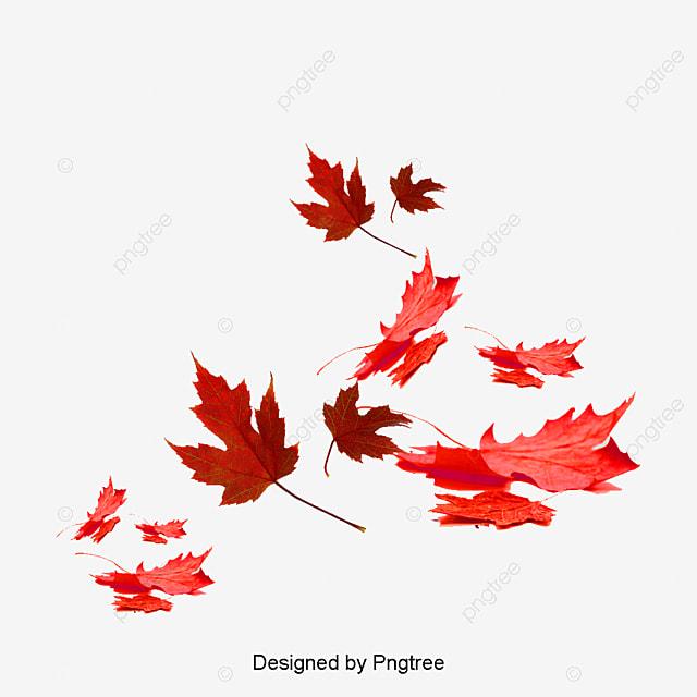 rouge de feuilles feuilles rouge des plantes fichier png