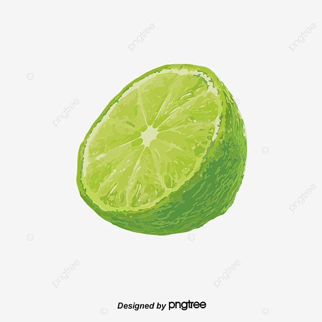 watercolor green lemon vector watercolor green lemon