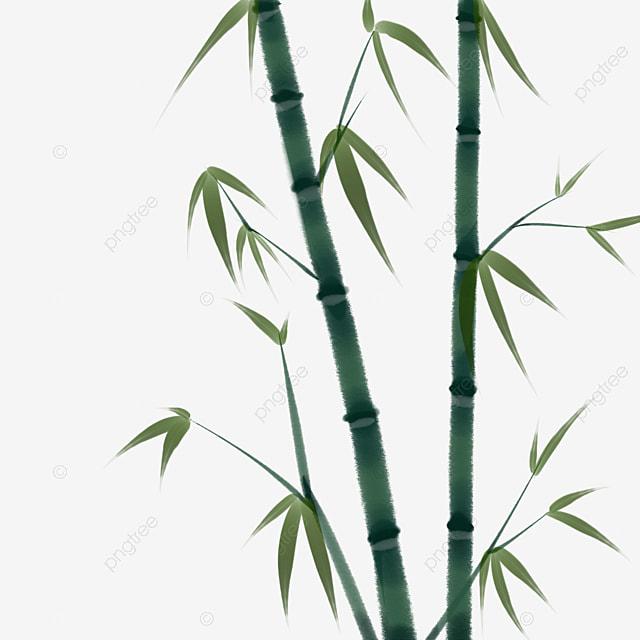 t u00e9l u00e9chargement de bambou feuilles les feuilles de bambou