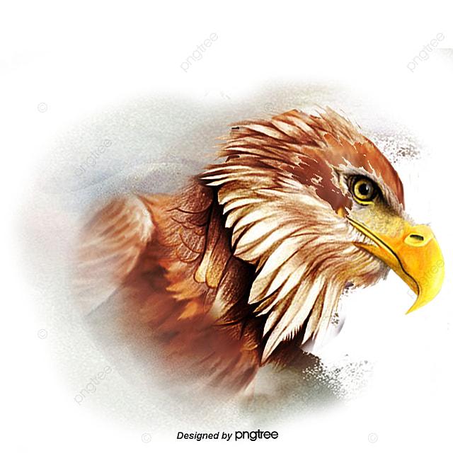 le vecteur de l aigle faucon faucon aquarelle png et