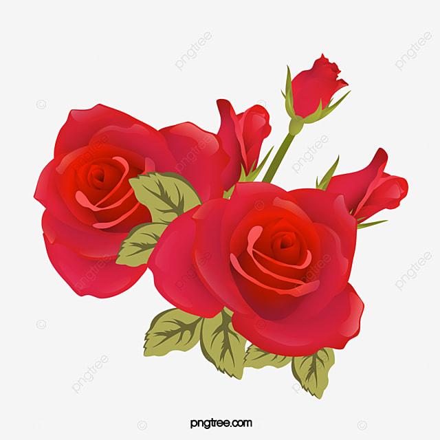 Bellas Rosas Rojas Vector Png Rose Rosa Roja Png Y Vector Para