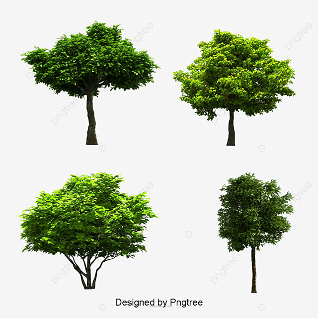 Tree PNG Images, Download 55,445 Tree PNG Resources with