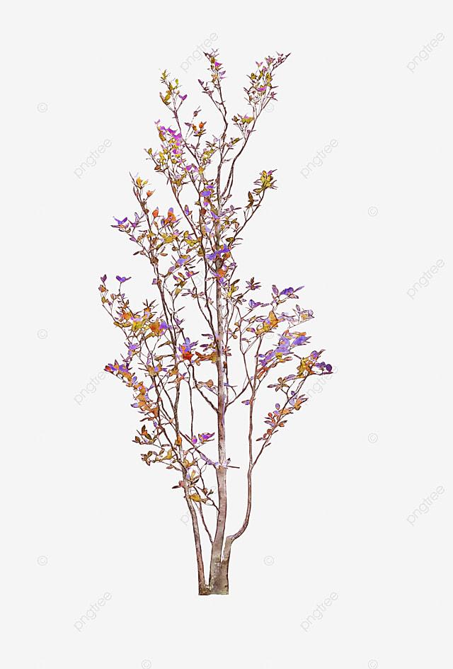 watercolor lavender watercolor clipart lavender